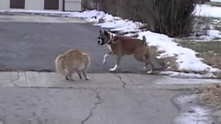 Бесстрашный кот против собаки  Лучшие бои животных