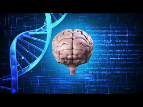 Анатомия человека в картинках Учебное видео по анатомии