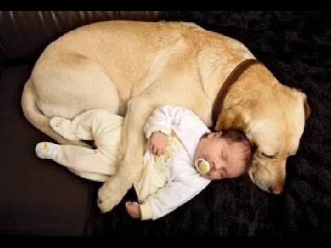 Cutest Dogs Putting Babies To Sleep Compilation 2016