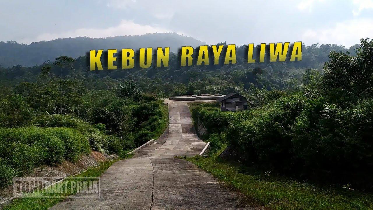 JARANG DIKETAHUI  Keliling Area Dalam Kebun Raya Liwa KRL ...