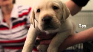 Jane Reilly Meets Reilly The Guide Dog Pup