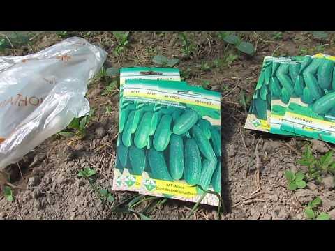 Вопрос: Кто уже покупал семена новой фирмы Симбиоз , какие отзывы?