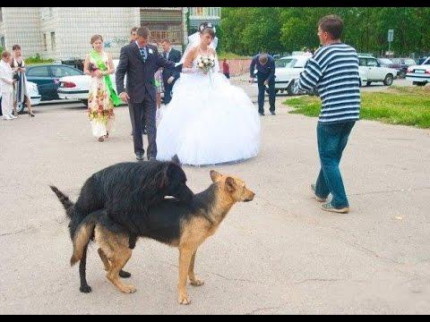 смешные казусы на свадьбе фото