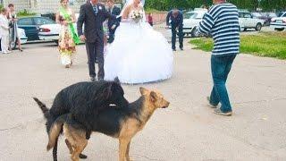 Прикольные картинки Неудачные свадебные фото