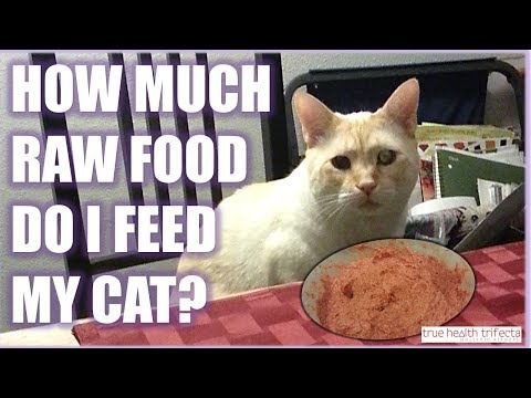 How much RAW FOOD should I feed my cat? - Portion Size Talk / Cat Lady Fitness