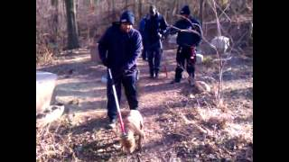 Raw Video: Authorities Seize 17 Pit Bulls From Kc Home
