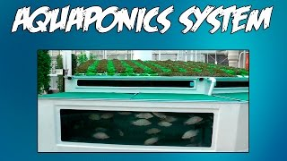 Aquaponics at Home