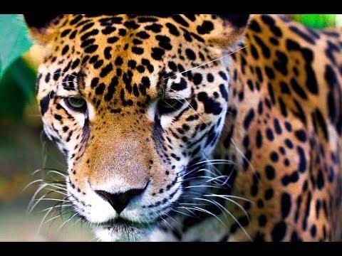 STUNNING BELIZE WILDLIFE + GUATEMALA-GoPro VIDEO