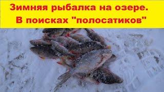 Зимняя рыбалка на озере В поисках полосатиков Winter fishing on the lake Fishing for perch in winter