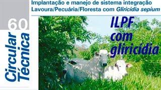 Publicação aborda gliricídia com integração lavoura, pecuária e floresta