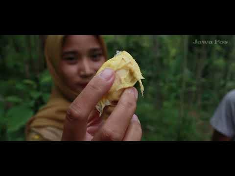 Jawa Pos Belah Durian Episode 41: Durian Kembang Lumajang