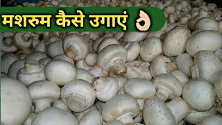 Mushroom Cultivation At Home In Hindi