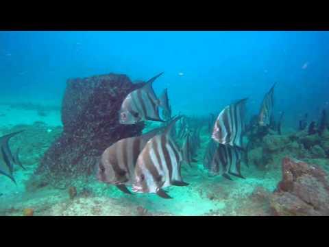 Los Desertores @ Dive & Ec Ocean pr