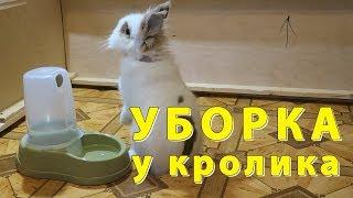 Уборка у декоративного кролика. Как живет Лилия? Побег!