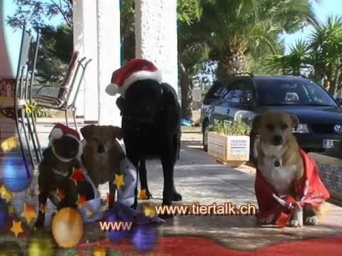 Tierische Weihnachtsgrüße.Tierische Weihnachtsgrüsse