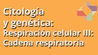 Respiración celular III: cadena respiratoria - Citología y Genética - Educatina
