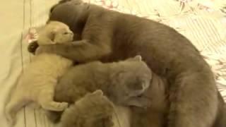 Котятам 3 недели  Кошачье воспитание