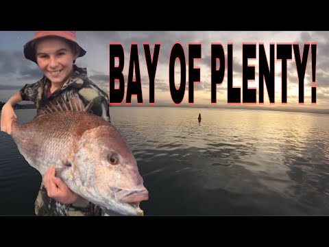 Tauranga Bay Of Plenty Fishing 2019
