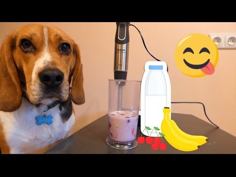 Dog Makes Smoothies (Funny Beagle Marsas)