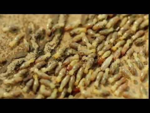 Canton Termite And Pest Control The Exterminator