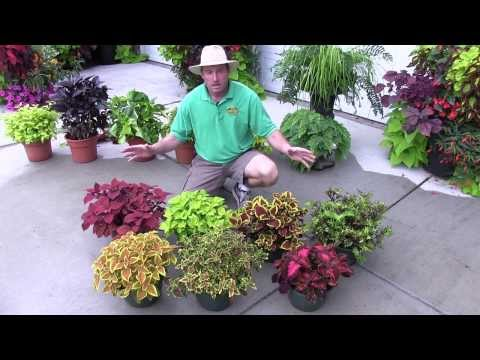 Foliage Plants: Part 2 Shade Plants