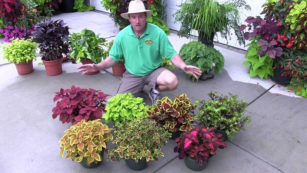 Foliage Plants: Part 2 (Shade Plants)   YouTube