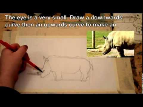 how to draw a rhino step by step easy