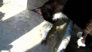 кошка не хочет курить