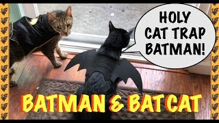 🦇🐾FUNNY CATS CHOSE HALLOWEEN COSTUMES🦇🐾