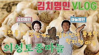김치명인과 마늘명인의 만남 마늘 맛집 의성 토종마늘 브…