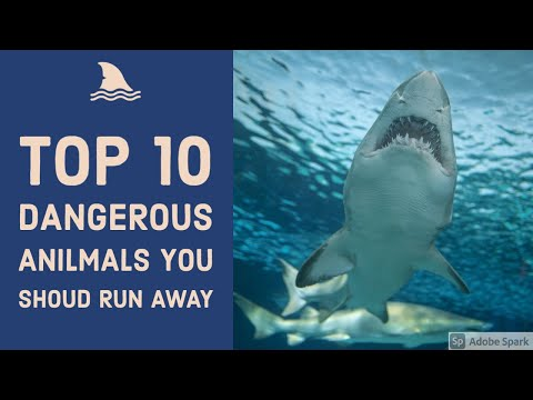 Top 10 Dangerous Animals In The World 2020 Top 10 Awesome Facts