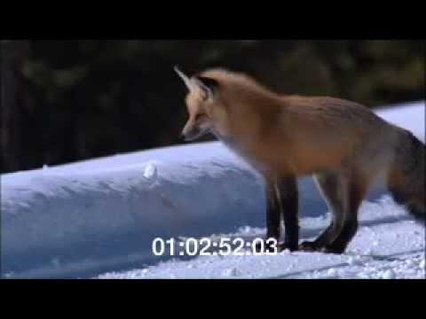 Yellowstone Winter Footage