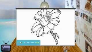 drawing daffodil easy draw daffodils sketch