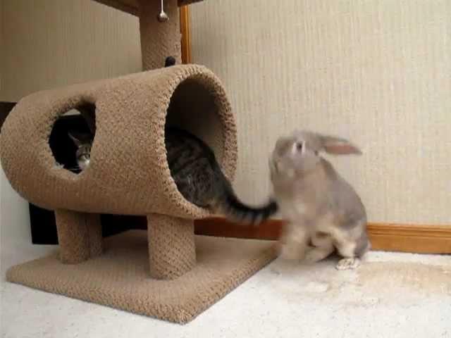 Bunny attacks cat