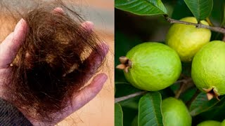 Stop Hair Loss And Grow Back Your Hair Using This Amazing Recipe Of Guava Leaves