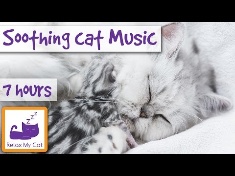 7 Hour Playlist to Calm Anxious and Restless Cats! Relaxation and Anti-Anxiety Music for All Cats!