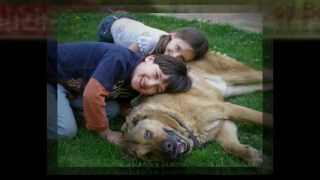 Doyestown, Pa Dog Training - Puppy Kindergarten - Bob's Pet Stop