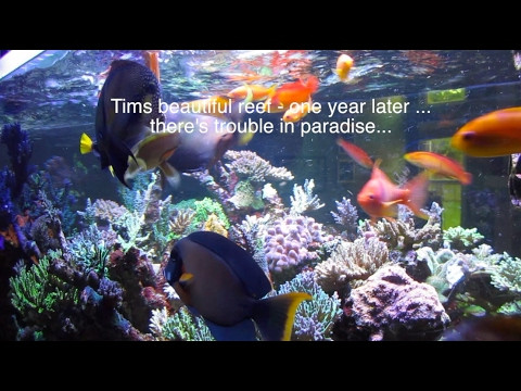 Tim's 400 Gallon Reef - 1 Year Update - RTN and STN hit some corals - there's trouble in paradise