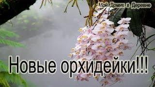Новые орхидейки!!!