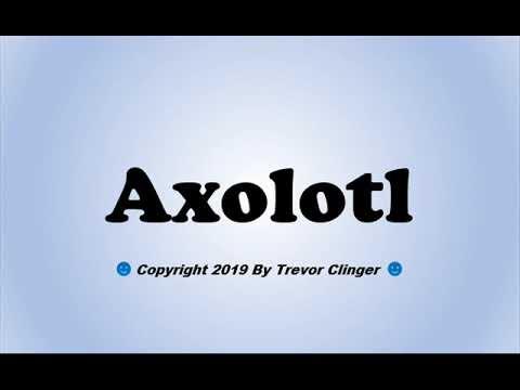 How To Pronounce Axolotl