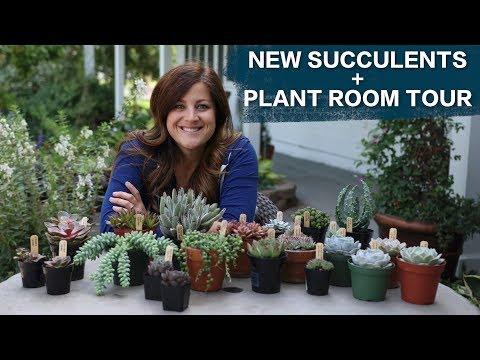New Succulents + Plant Room Tour! 🌿🌵😊 // Garden Answer