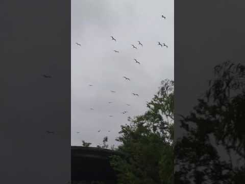 Frigates on the river w/James Beck - Trop Storm Cindy