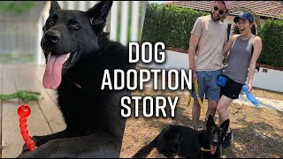 We finally got a dog   German Shepherd adoption story
