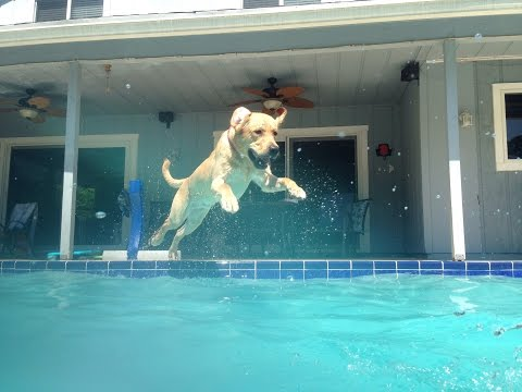 Dog jumping into a pool 2