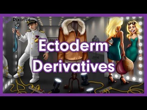 Ectoderm Derivatives Mnemonic For MCAT