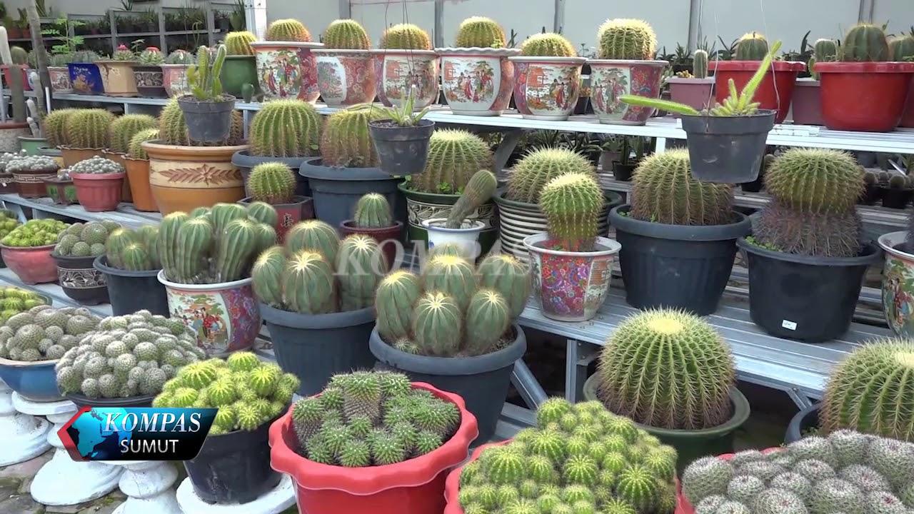 Suvenir Kaktus Medan Youtube