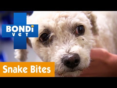 How To Save Your Pet From Snake Bites | Pet Health