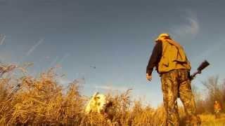 Northeast Bird Dog Training-lightning Flash English Setters- Www.lightningflashsetters.com