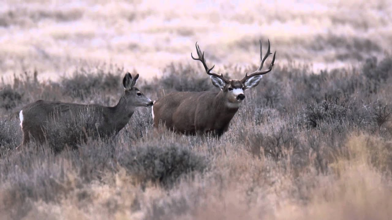 monster mule deer wallpaper wwwpixsharkcom images