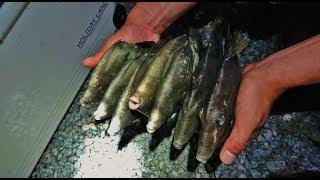 ブログも見てね!この日の 関西お魚突き インスタ獲れたて情報はこちら ...